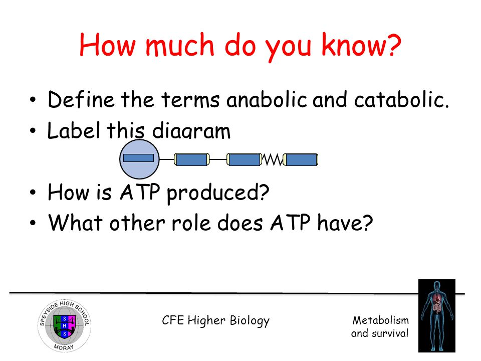 How much do you know Define the terms anabolic and catabolic.