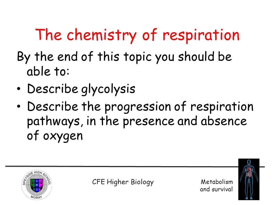 The chemistry of respiration