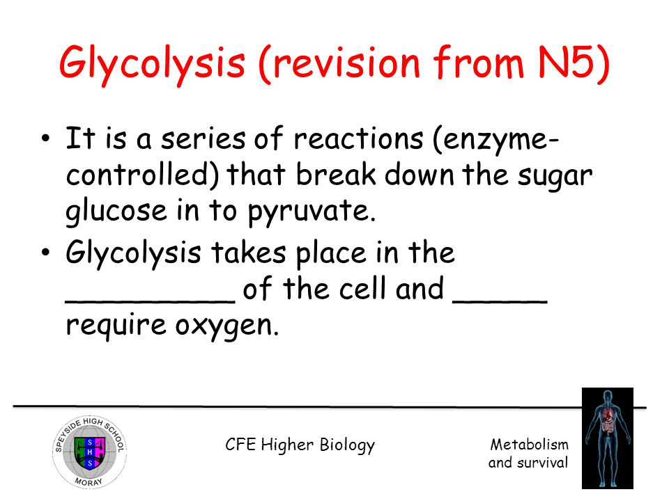 Glycolysis (revision from N5)