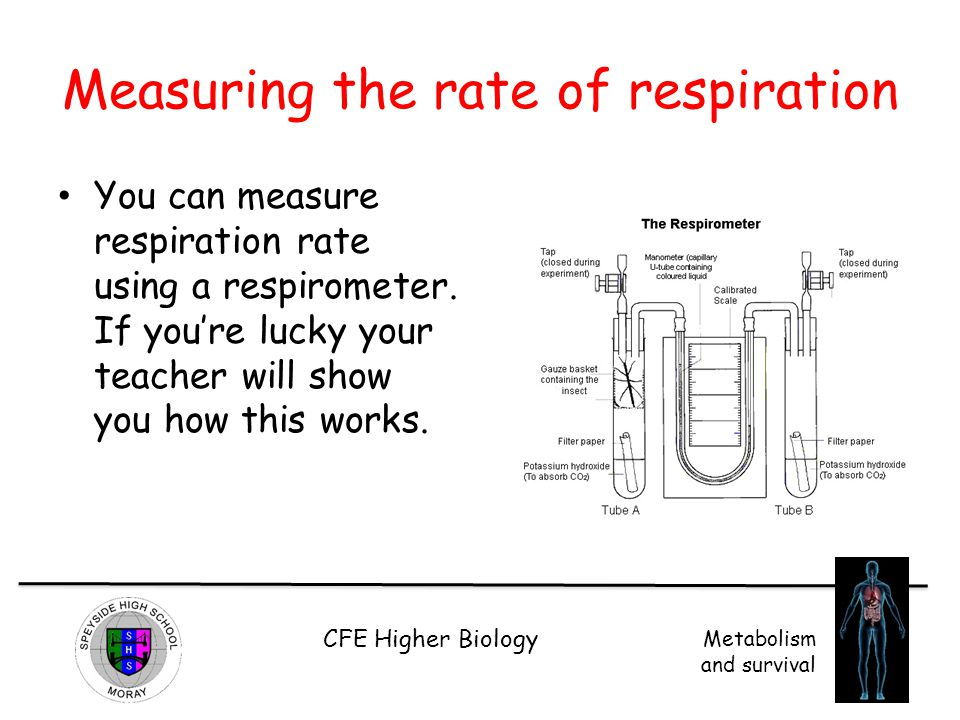 Measuring the rate of respiration