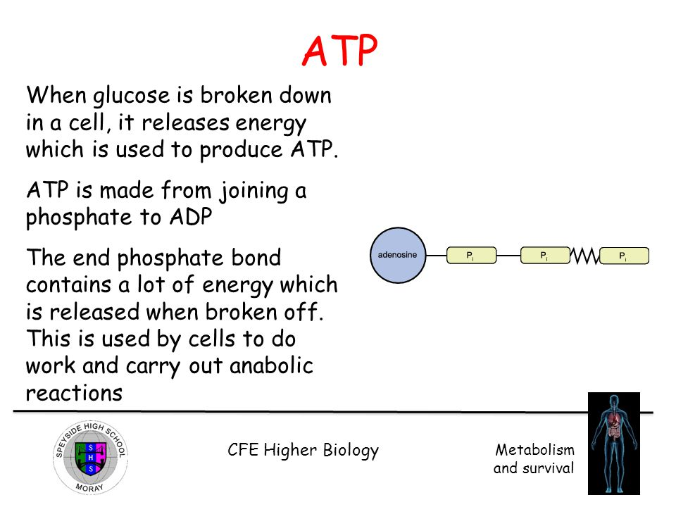 ATP When glucose is broken down in a cell, it releases energy which is used to produce ATP. ATP is made from joining a phosphate to ADP.