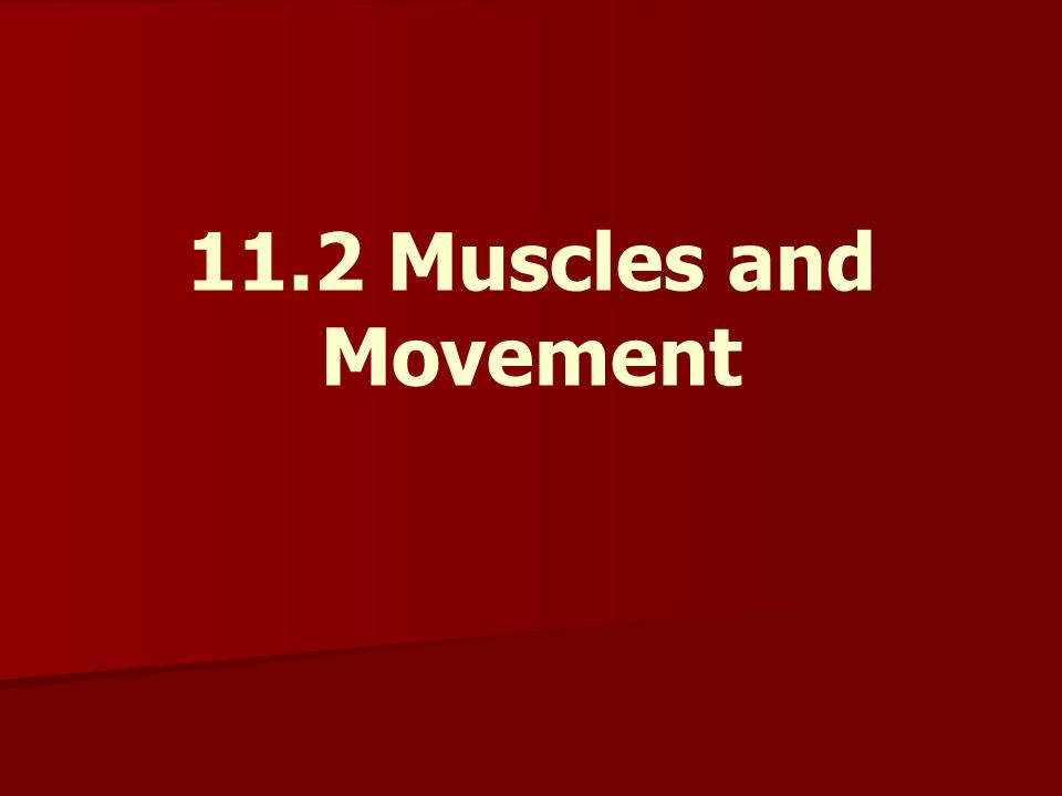 11.2 Muscles and Movement