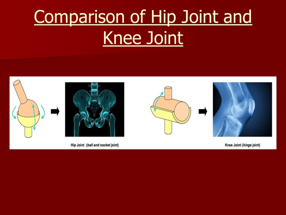 Comparison of Hip Joint and Knee Joint