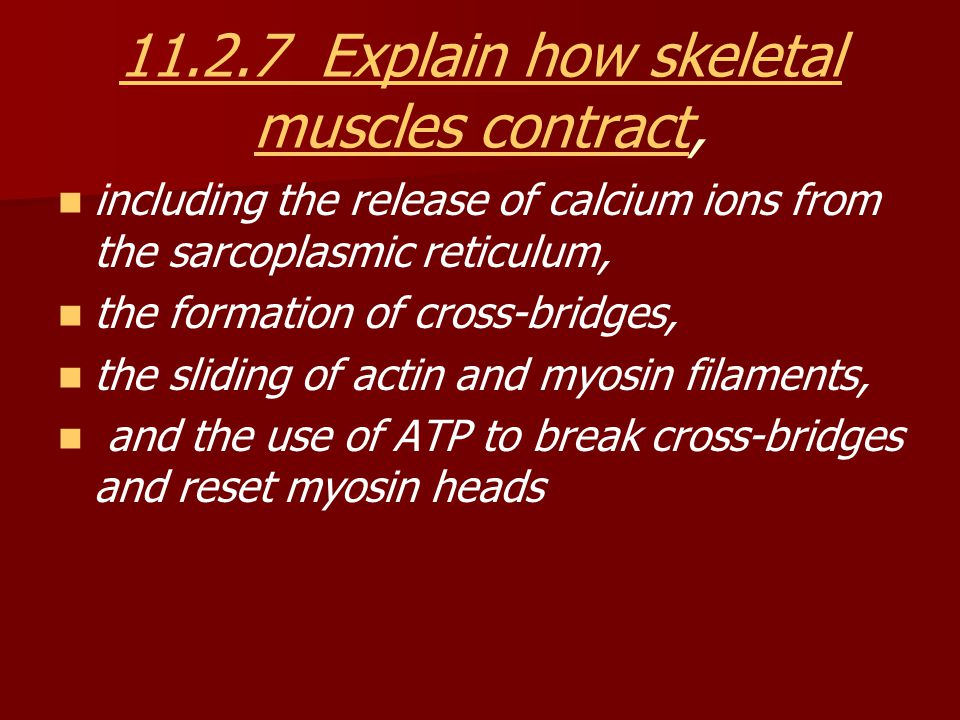 11.2.7 Explain how skeletal muscles contract,