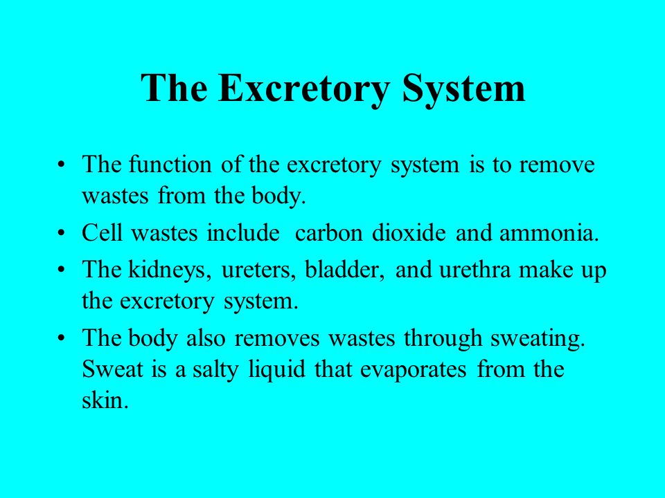 The Excretory System The function of the excretory system is to remove wastes from the body. Cell wastes include carbon dioxide and ammonia.