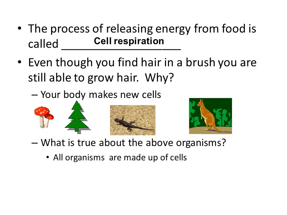 The process of releasing energy from food is called ___________________