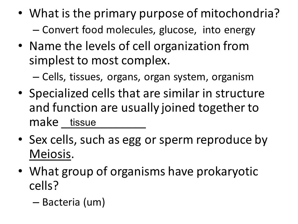 What is the primary purpose of mitochondria