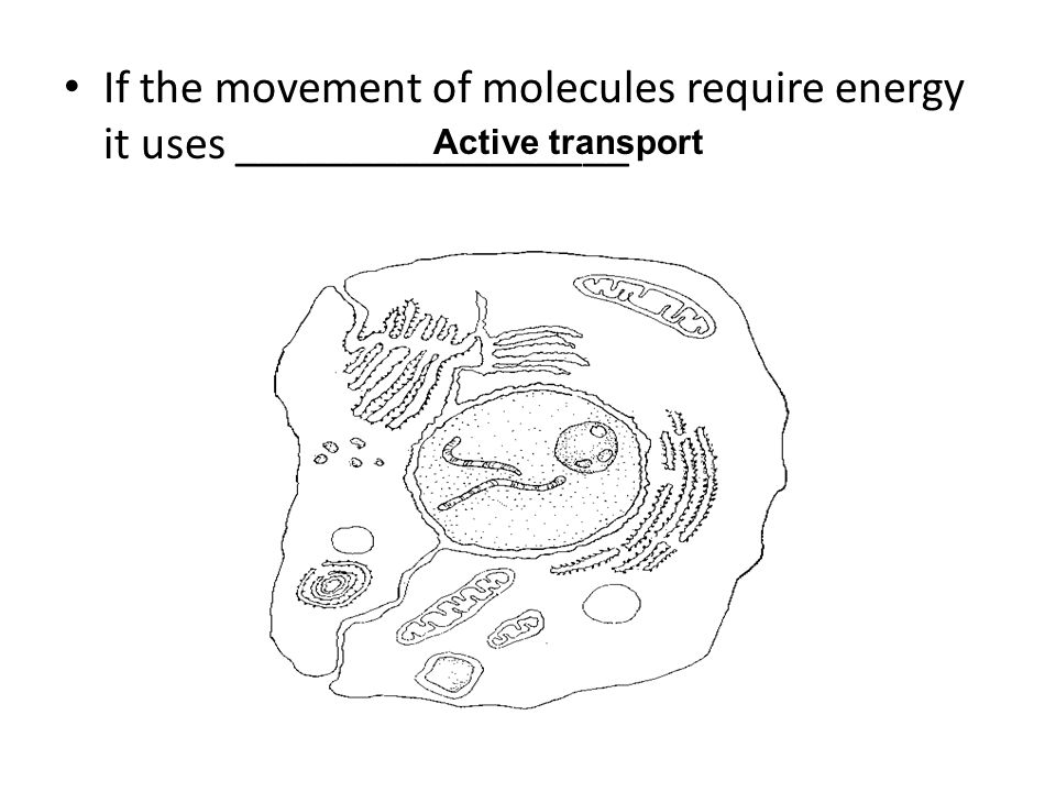 If the movement of molecules require energy it uses _________________