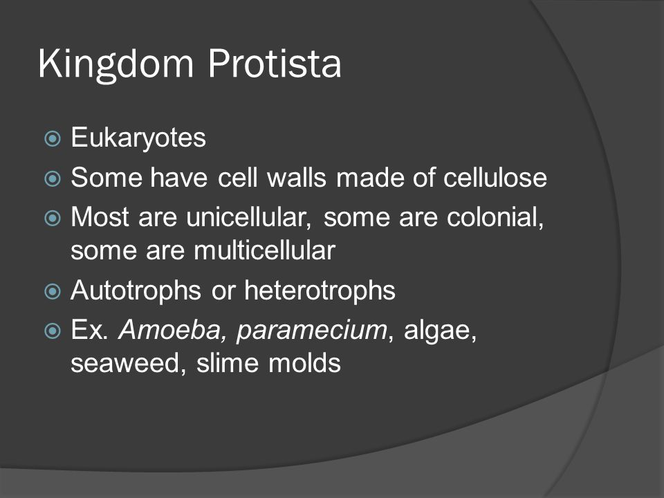 Kingdom Protista Eukaryotes Some have cell walls made of cellulose