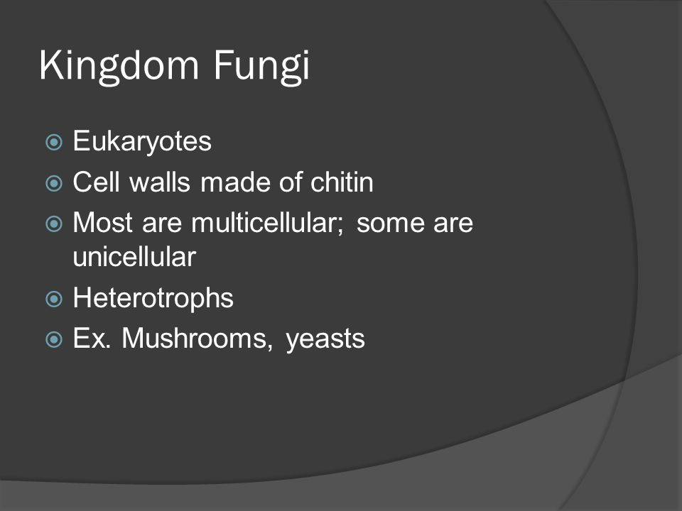 Kingdom Fungi Eukaryotes Cell walls made of chitin