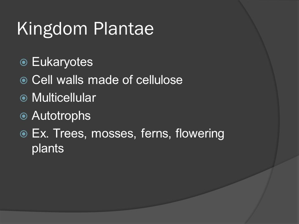 Kingdom Plantae Eukaryotes Cell walls made of cellulose Multicellular