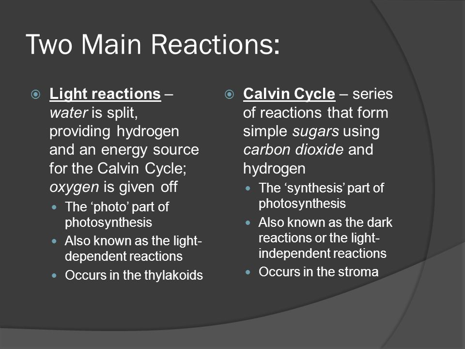 Two Main Reactions: Light reactions – water is split, providing hydrogen and an energy source for the Calvin Cycle; oxygen is given off.