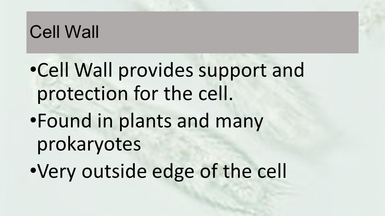 Cell Wall provides support and protection for the cell.