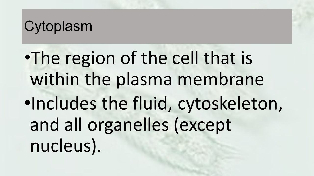 The region of the cell that is within the plasma membrane