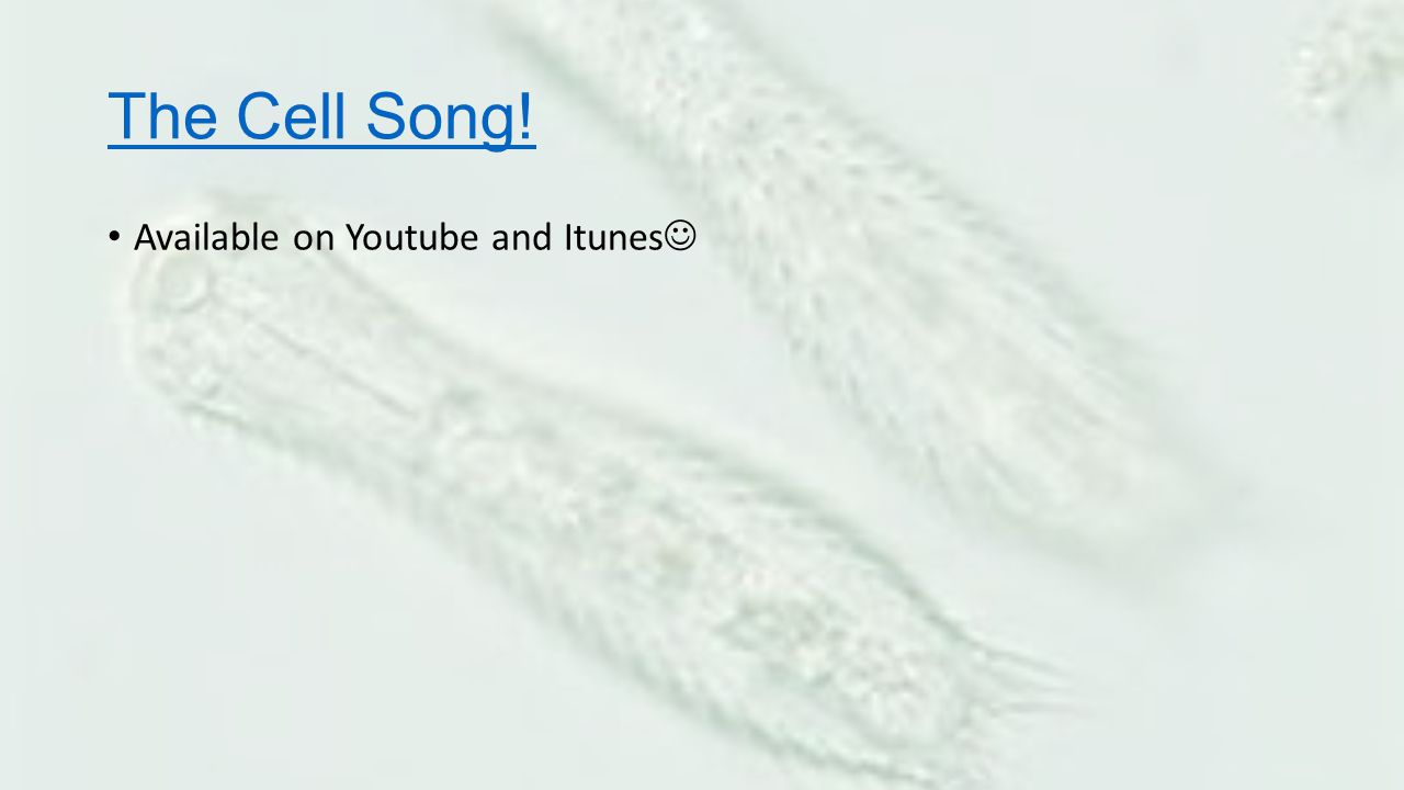 The Cell Song! Available on Youtube and Itunes