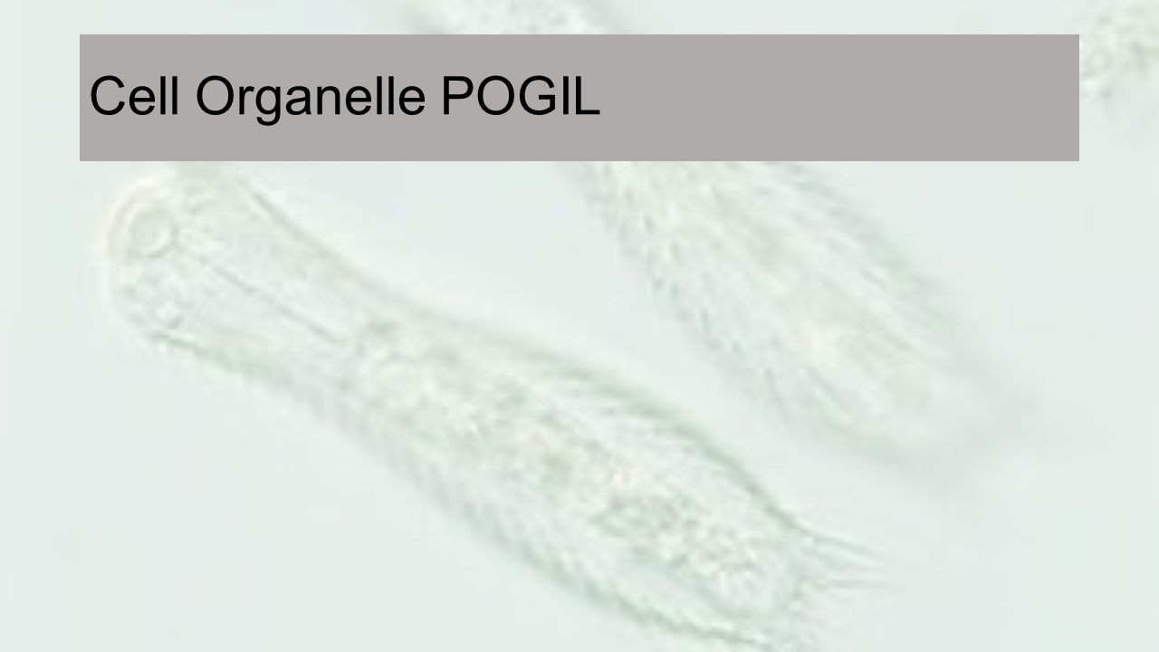 Cell Organelle POGIL