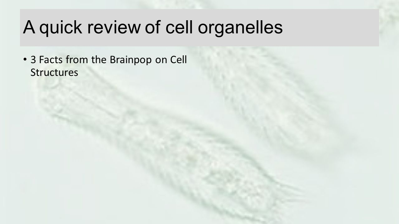 A quick review of cell organelles
