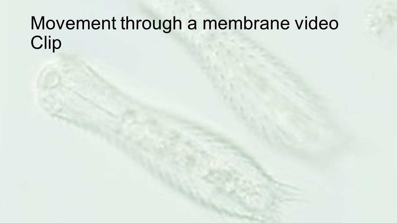 Movement through a membrane video Clip