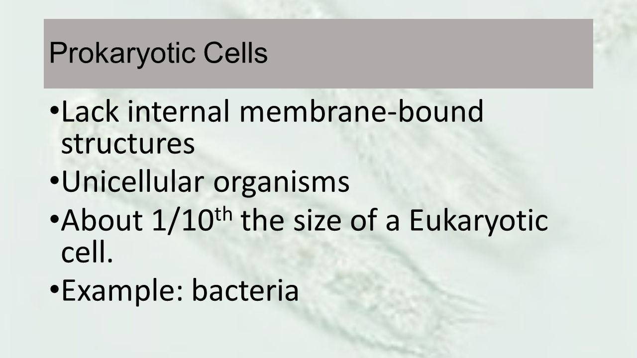 Lack internal membrane-bound structures Unicellular organisms