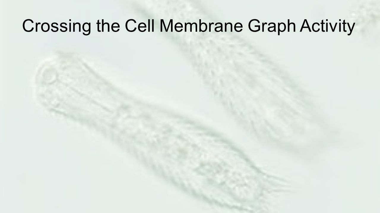 Crossing the Cell Membrane Graph Activity