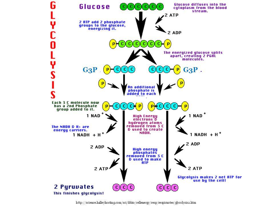 G3P G3P http://science.halleyhosting.com/sci/ibbio/cellenergy/resp/respirnotes/glycolysis2.htm