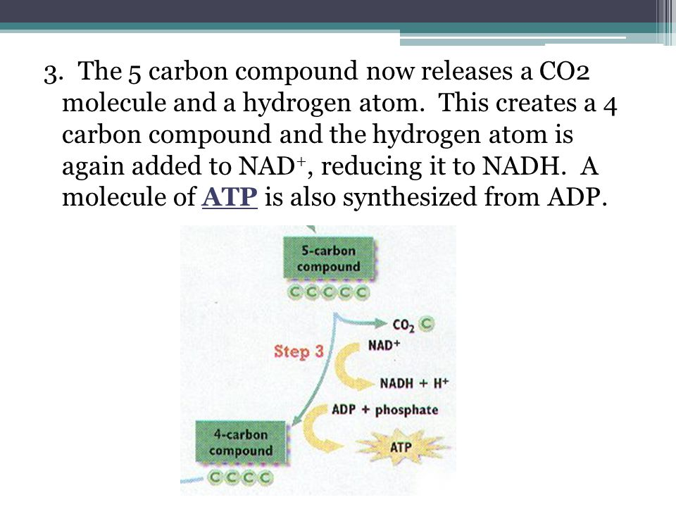 3. The 5 carbon compound now releases a CO2 molecule and a hydrogen atom.