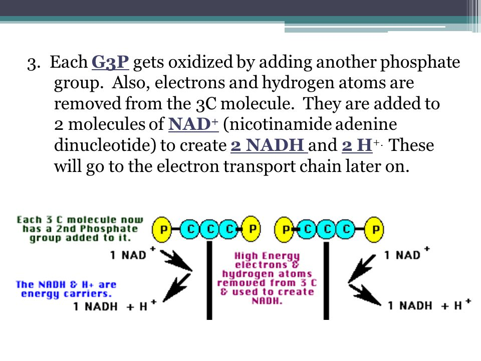 3. Each G3P gets oxidized by adding another phosphate group