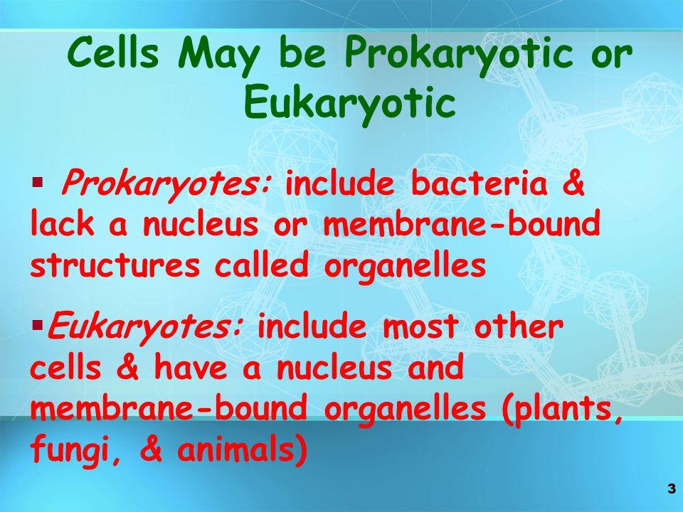 Cells May be Prokaryotic or Eukaryotic