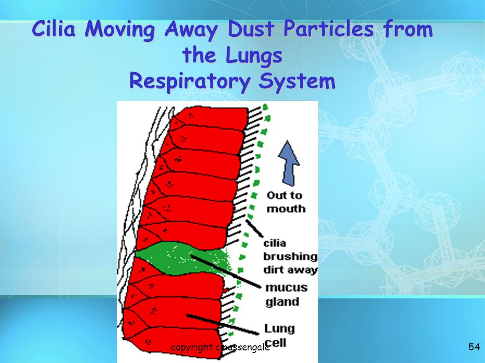 Cilia Moving Away Dust Particles from the Lungs Respiratory System