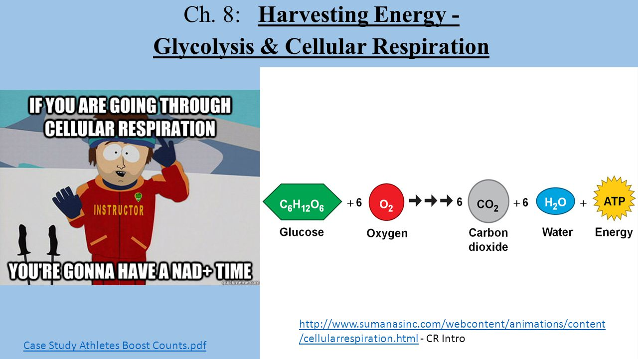 Ch. 8: Harvesting Energy - Glycolysis & Cellular Respiration