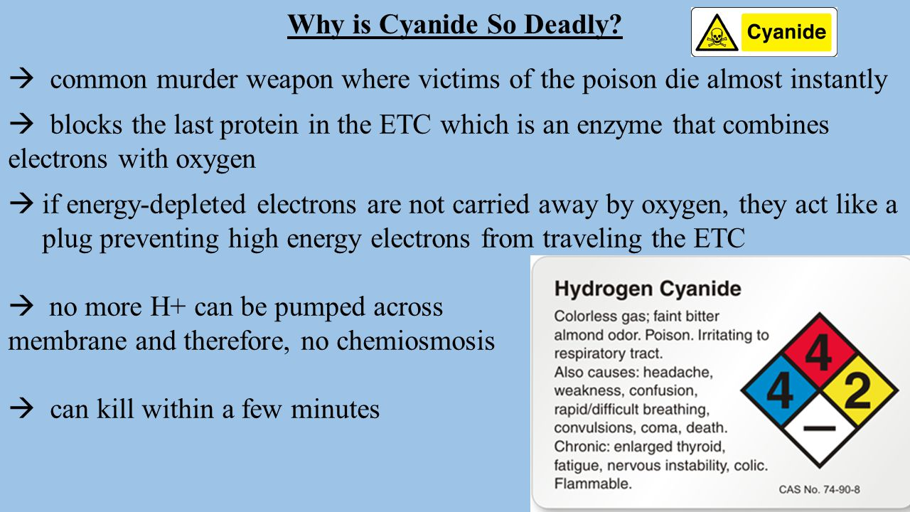 Why is Cyanide So Deadly