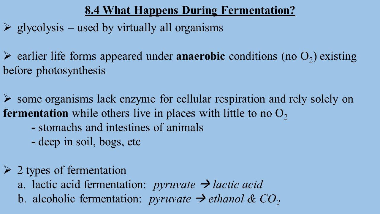 8.4 What Happens During Fermentation