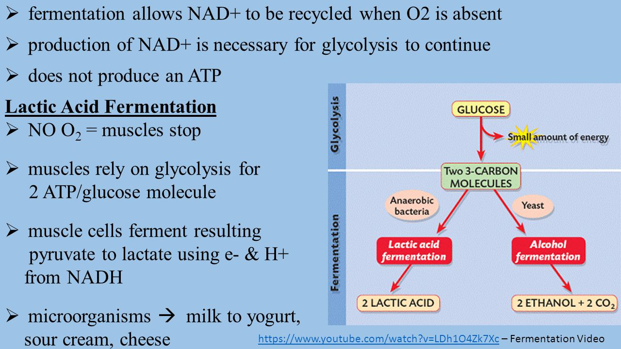 fermentation allows NAD+ to be recycled when O2 is absent