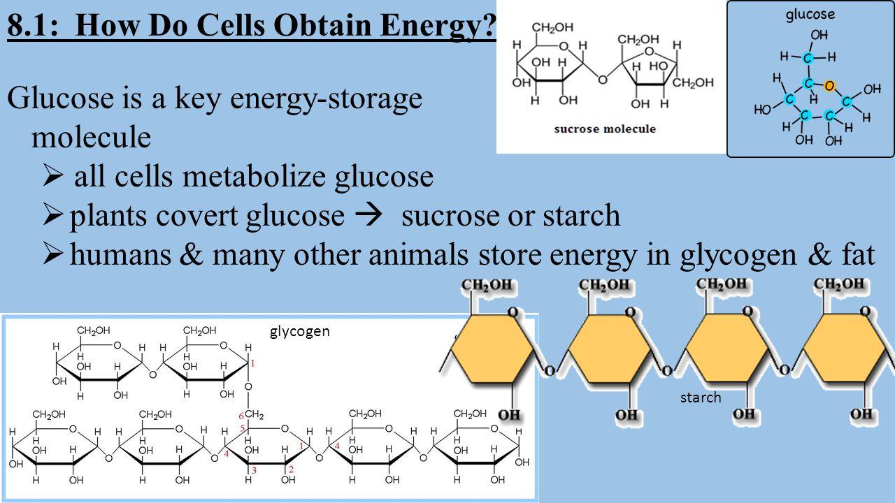 8.1: How Do Cells Obtain Energy