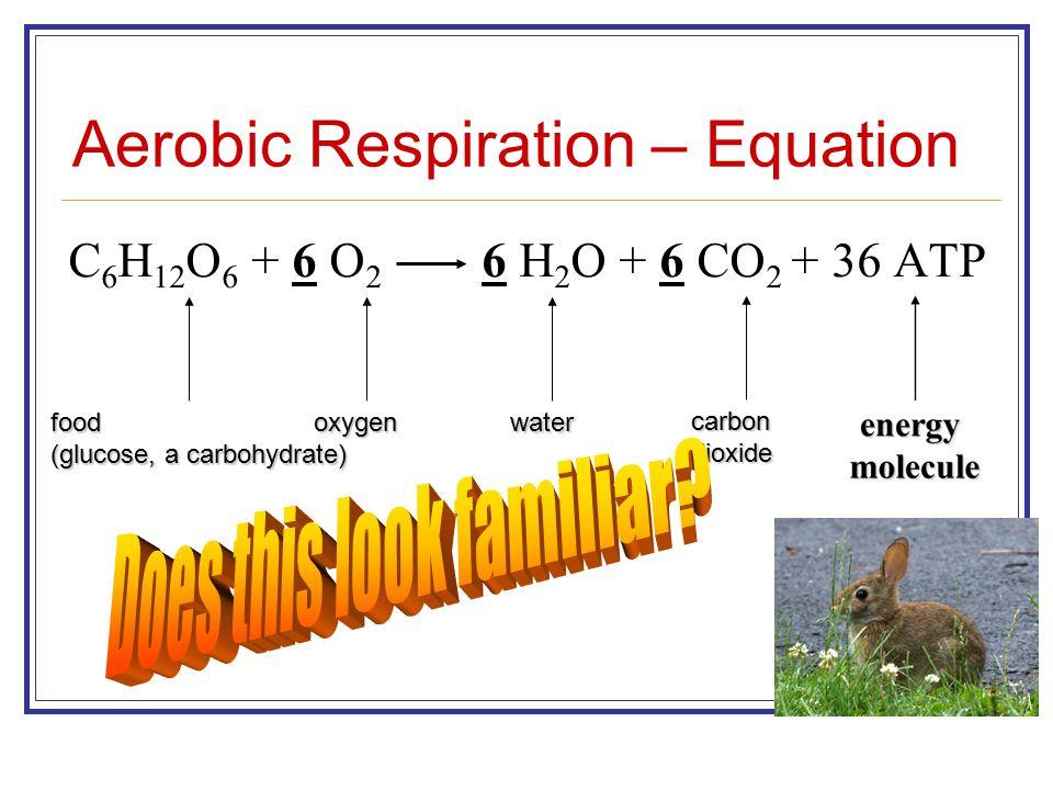Aerobic Respiration – Equation