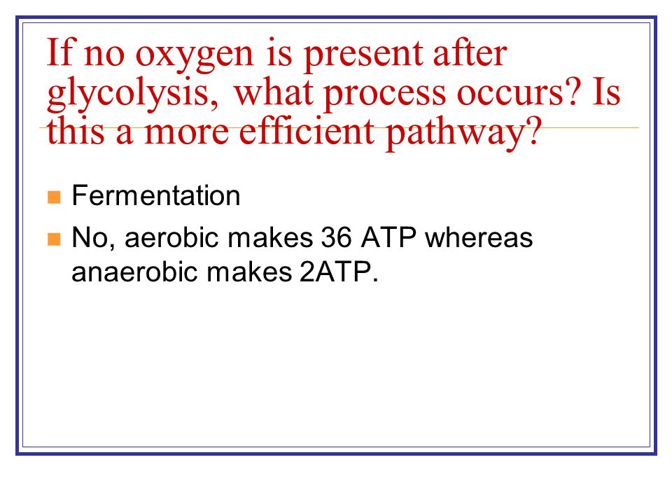 If no oxygen is present after glycolysis, what process occurs