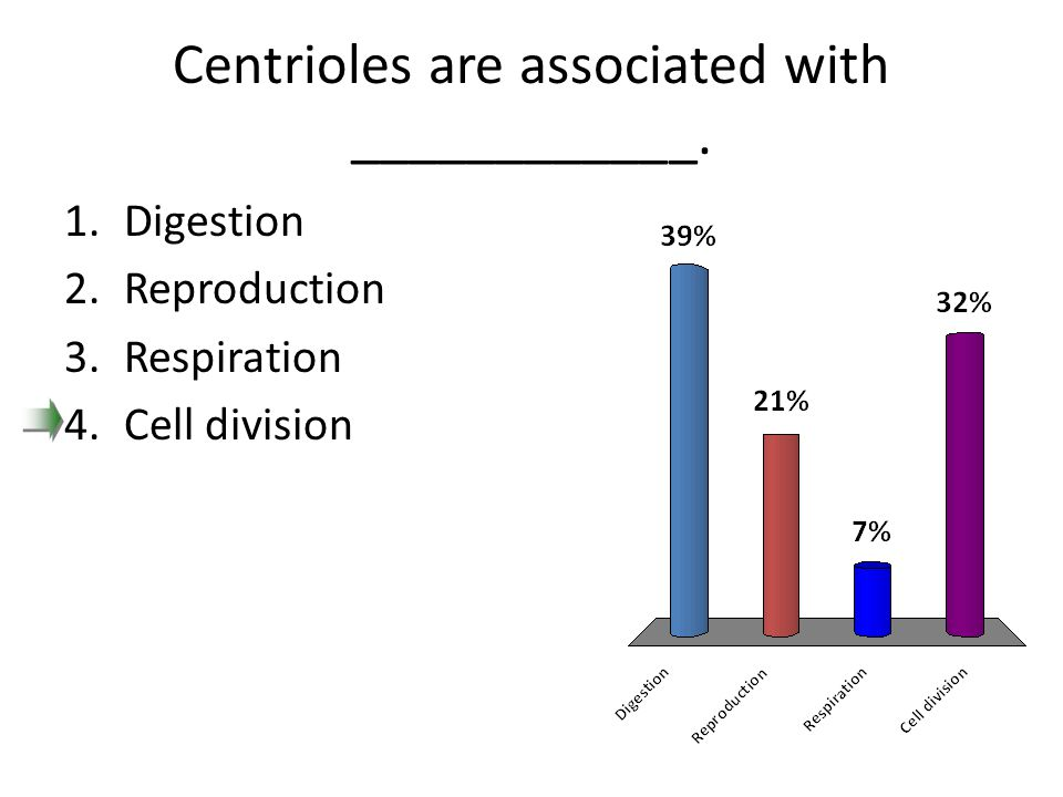 Centrioles are associated with ____________.