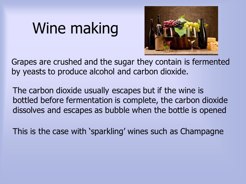 Wine making Grapes are crushed and the sugar they contain is fermented