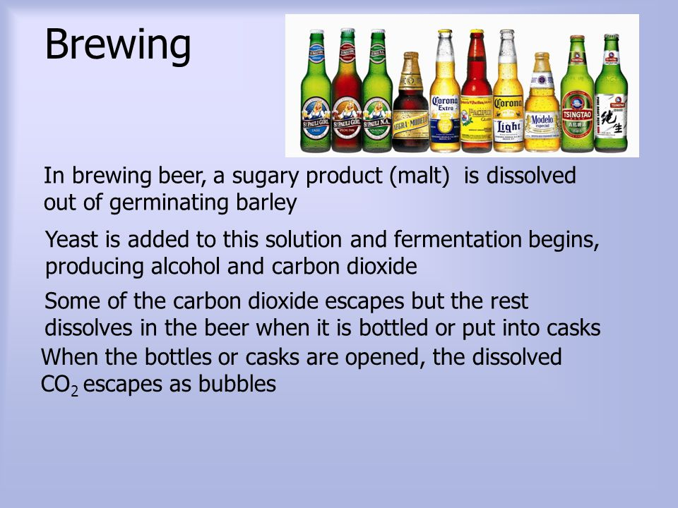 Brewing In brewing beer, a sugary product (malt) is dissolved out of germinating barley.
