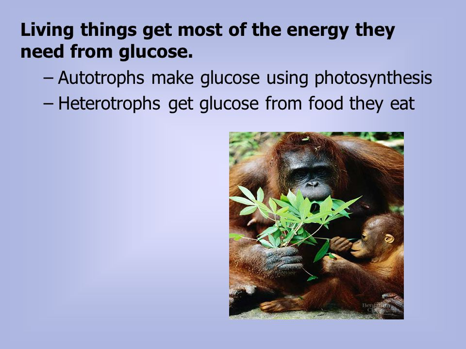 Living things get most of the energy they need from glucose.
