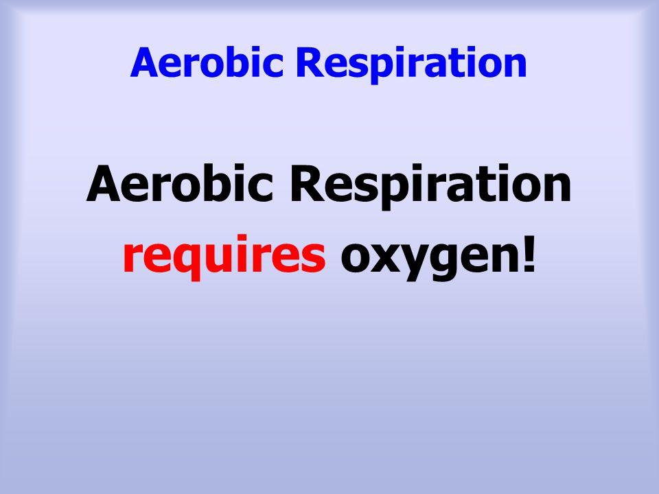 Aerobic Respiration requires oxygen!
