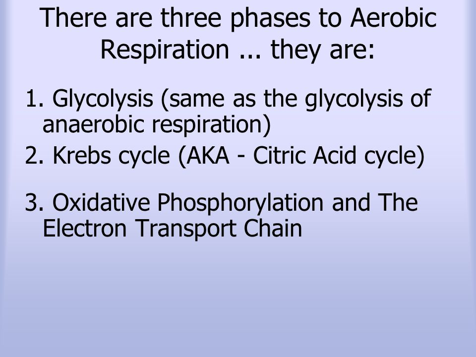 There are three phases to Aerobic Respiration ... they are: