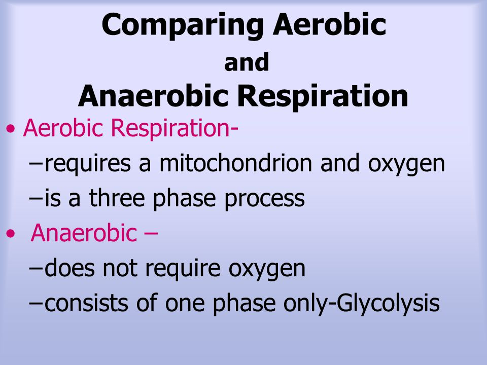 Comparing Aerobic and Anaerobic Respiration