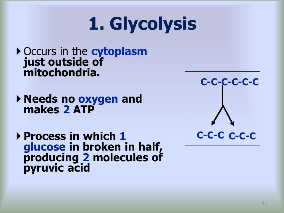 1. Glycolysis Occurs in the cytoplasm just outside of mitochondria.