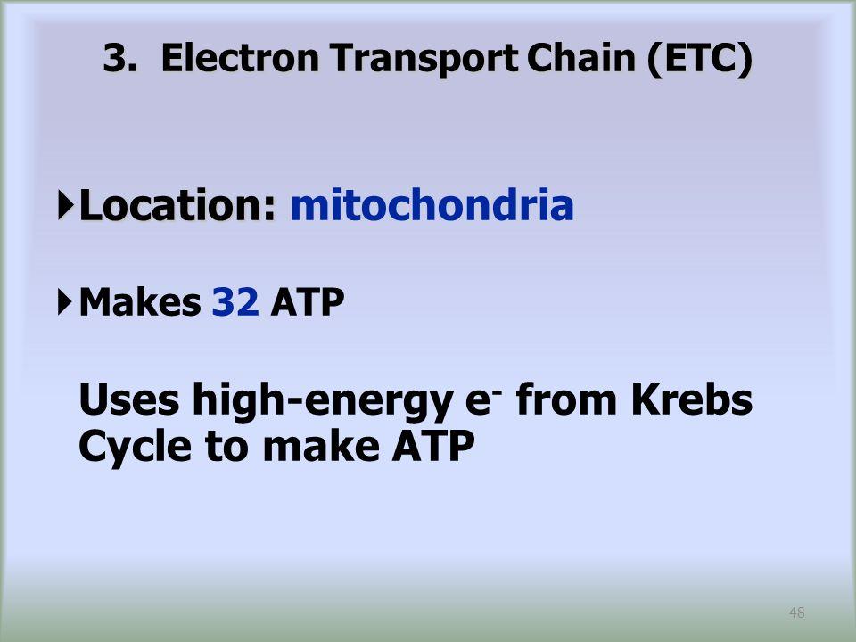 3. Electron Transport Chain (ETC)