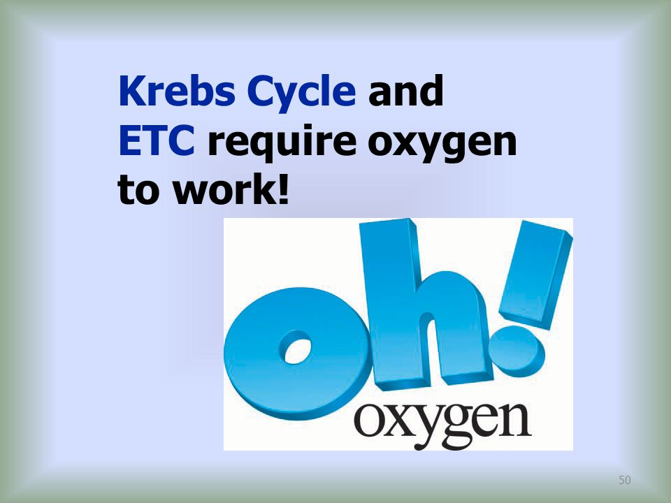 Krebs Cycle and ETC require oxygen to work!