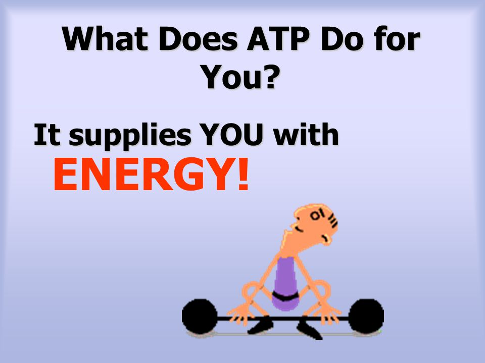 What Does ATP Do for You It supplies YOU with ENERGY! 7