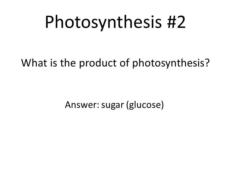 What is the product of photosynthesis
