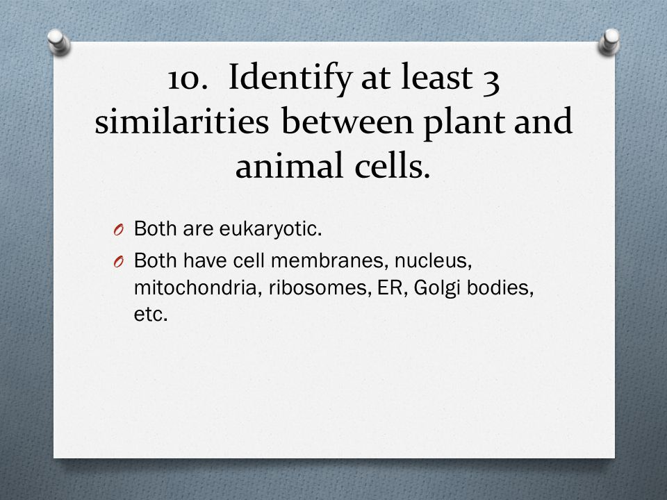 10. Identify at least 3 similarities between plant and animal cells.
