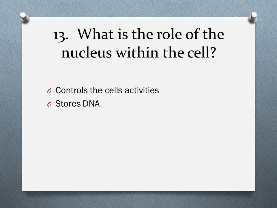 13. What is the role of the nucleus within the cell